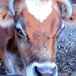 Hanmer Springs Animal Park照片