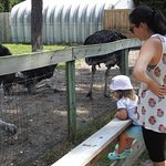 Изображение Aloha Safari Zoo