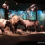 Nature And Forest Museum - Bialowieza National Parkの写真