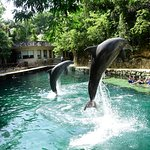 Photo of Delphinus Xcaret