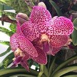 Marie Selby Botanical Gardens resmi