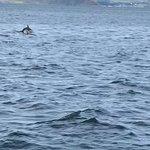 Foto SkyeXplorer Boat Trips