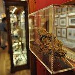 Foto de Hash Marihuana & Hemp Museum