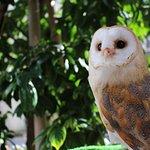 Foto de Owl Cafe & Bar Owl Village Kichijoji