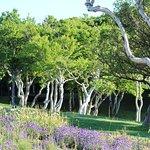 稚内公園の写真