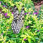 Found in their Butterfly garden