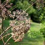 Zdjęcie Wild Herbs Garden Haimburger
