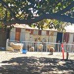 Photo of Bella Vista Farm Park