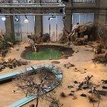 Zoologisches Museum König Foto