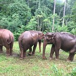 Picture of some of the elephants there.