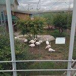 Roev Ruchey Zoo照片