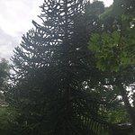 Botanische Garten der Universitat Bonnの写真