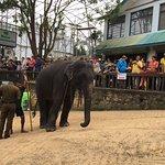 Foto Pinnawala Elephant Orphanage