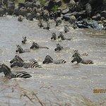 Mara River Crossing - Pic 1
