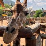 Foto de Cheyenne Mountain Zoo
