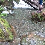 Foto de Quinault Rain Forest