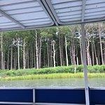 shoreline osprey