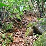 Фотография Copolia Trail