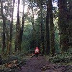 Bosque de arboles centenarios