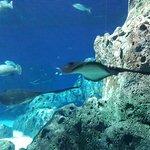 Photo of Den Bla Planet, National Aquarium Denmark