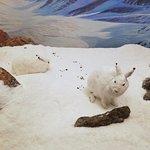 bunny diorama