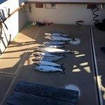 Zdjęcie Daydreamer Fishing Charters