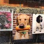 Bild från Haute Dogs & Fries