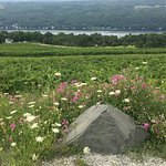 Keuka Lake Wine Trail Foto