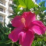 beautiful tropical flowers everywhere!