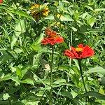 Foto de Jungle Butterfly Farm