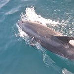 Capt. Dave's Dolphin & Whale Watching Safari resmi