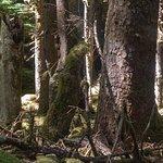 Naikoon Provincial Park ภาพถ่าย