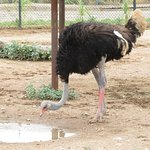 アビリーン動物園の写真