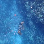 crew member Bronson free diving