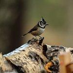 Foto van Highland Wildlife & Birdwatch Safaris