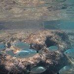 Aguas trasparentes con peces