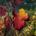 Outono na Torcello