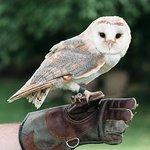 Dingle Falconry