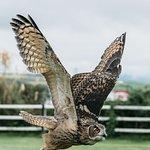 Billede af Dingle Falconry Experience