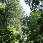 Foto van Spetchley Park Gardens