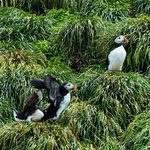 Foto de Gatherall's Puffin and Whale Watch