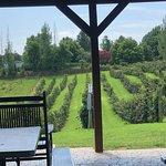 Hill Top Berry Farm & Wineryの写真