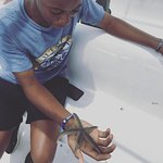 Marine life 2
