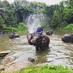 ภาพถ่ายของ ศูนย์อารักษ์ช้างไทย