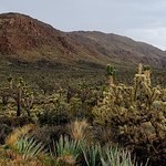 Фотография Mojave National Preserve