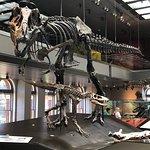 صورة فوتوغرافية لـ Natural History Museum of Los Angeles County