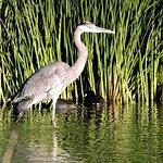 Bild från Henderson Bird Viewing Preserve