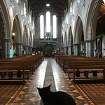 St Canice's Cathedral along with their beautiful church cat