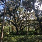 Washington Oaks Gardens State Park照片