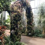 Arch in the orchid house.